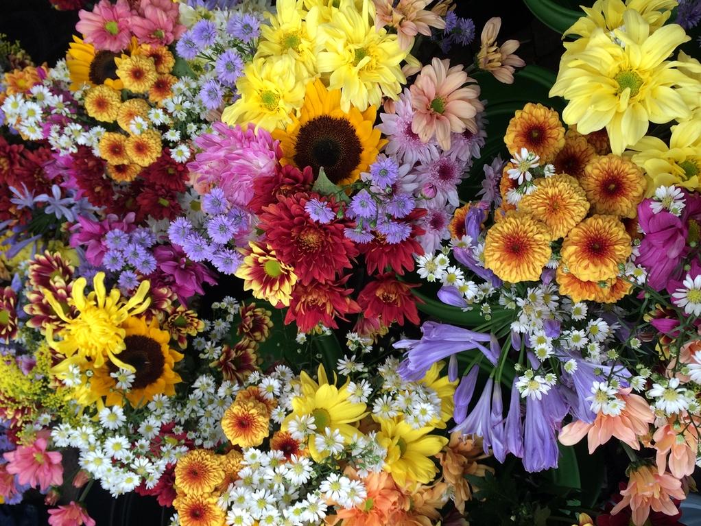 feira-das-flores-12