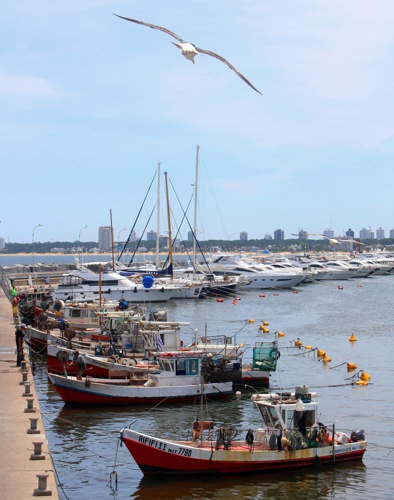 porto-punta-del-este-uruguai.jpg