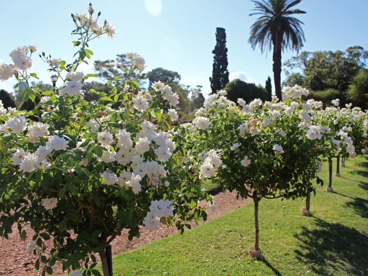 bosques-de-palermo-botanico-el-rosedal
