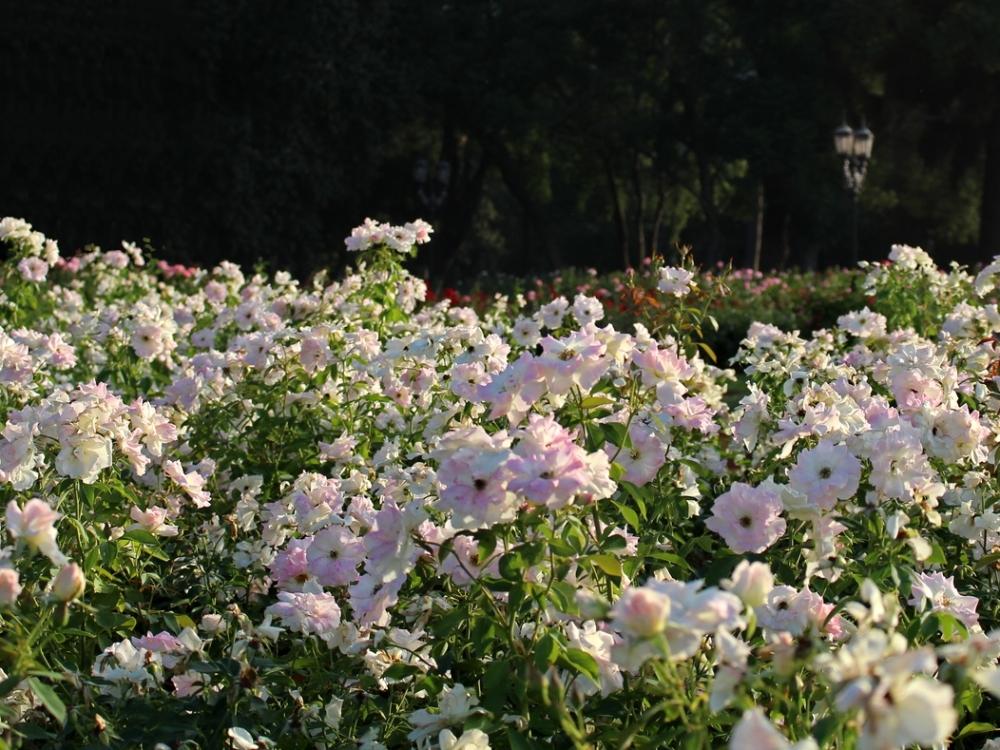 bosques-de-palermo-botanico-rosedal-buenos-aires